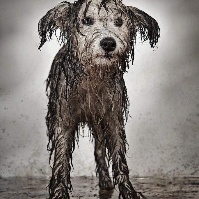 Dog needs a bath and a groom