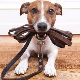 pet services - dog walking